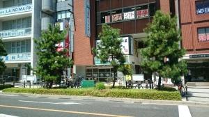 上本町の街路樹はなんと松の木だったのね。