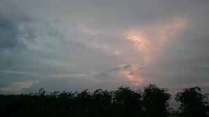 風なでる秋ナス畑とうろこ雲。