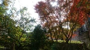 リビングで、紅葉狩り。