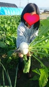 ピンチヒッターで畑訪問。大きなかぶも大根もゲット。