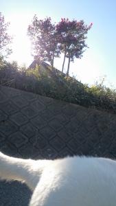 初挑戦 jog with dog.