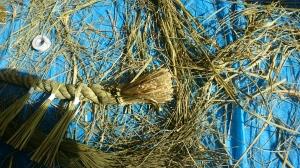 青い青いしめ縄用の稲わら。日照りを受ける前に収穫して寝かせていたものとのこと。