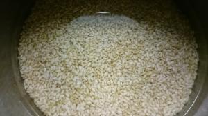 玄米もち米さっそく洗いました。