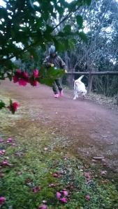 さざんかの紅さす夕暮れ犬はしゃぎ。 haru