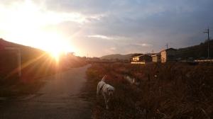 山田川お散歩run。