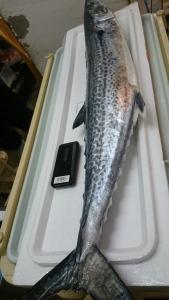 お魚の春が届いて、さばいてもらいました。