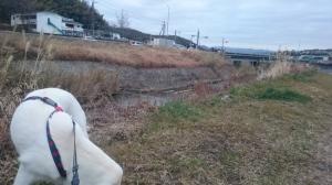 朝の山田川散歩。