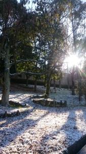 木々の枝ぶりも雪がふちどる。