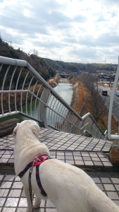 春待つ犬と山田川。