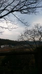 芽抱いて四月の風を待ちわびぬ haru